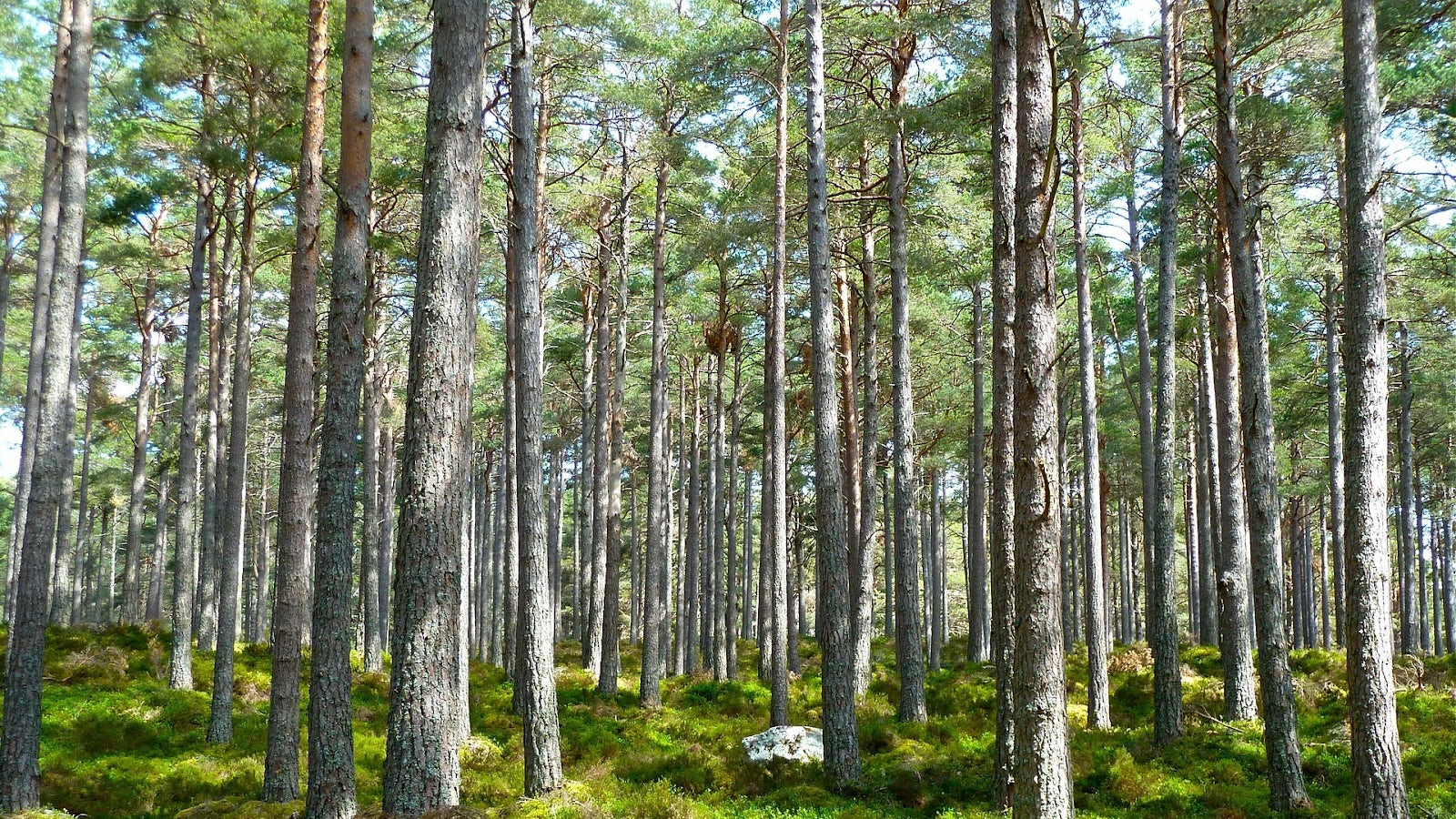 Bild på en svensk skog.